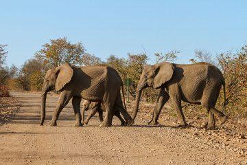 Krüger Nationalpark intensiv