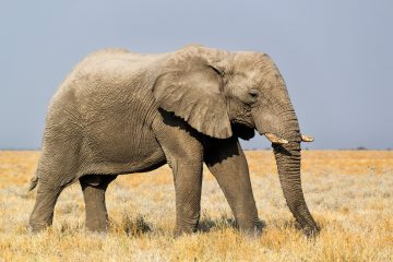 Safari Deluxe für Tierfotografen in Namibia