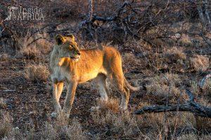 Tipps zur Wildlife Fotografie