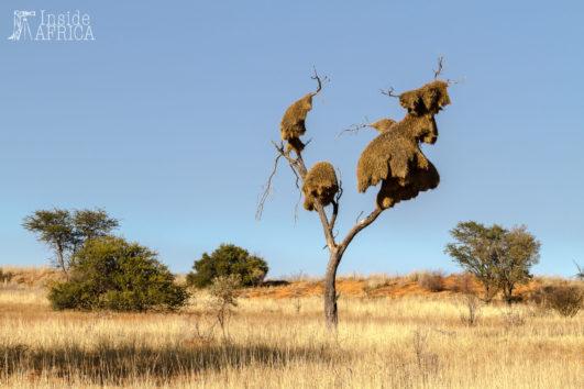 Wüstenwelten in Namibia und Südafrika