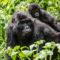 Uganda Fotoreise